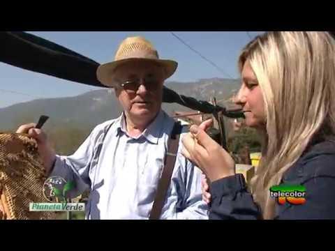 Pianeta Verde: Azienda Agricola Apicoltura del Sampì a Botticino (BS) - 17.04.2017