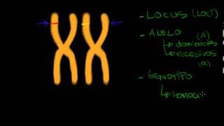 Conceptos de genética