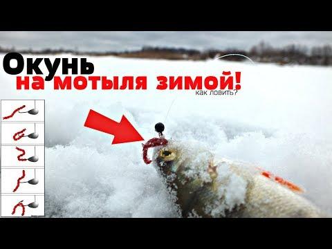 Как ловить оКуня на мотыля зимой? Как правильно насадить мотыля зимой!?