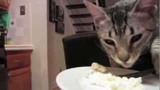 Кот ест с ложки!как человек!