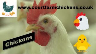 Court Farm Chickens Introduction Video