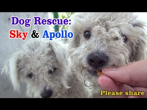 Sky & Apollo rescued while the Endeavour space shuttle flies over us  a MUST SEE.  Please share.