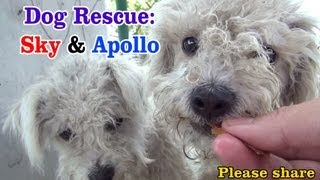 Sky & Apollo rescued while the Endeavour space shuttle flies over us - a MUST SEE.  Please share.