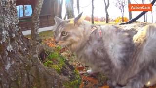 投稿者:CAT HALさんコメント 昨年の秋、猫のハルと車で東京〜九...