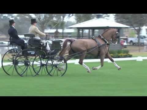 Team Sterling - USEF Single Horse National Champion