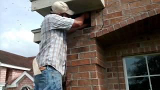 Bee removal rescued in La Villa, TX, by Luis Slayton from Bee Strong Honey and Beehive Removal