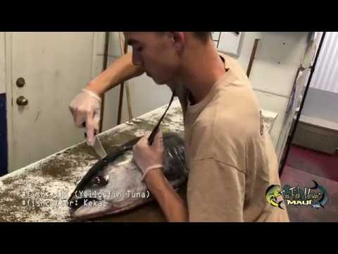 How To Cut A Yellowfin Tuna AHI SONY 4K