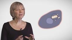 MOOC côté cours : La mitochondrie : généralités