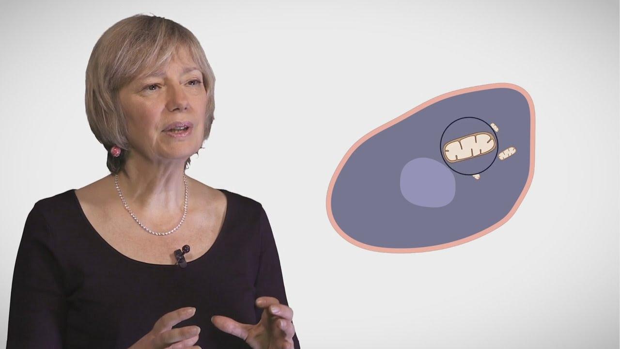 MOOC côté cours : La mitochondrie : généralités - YouTube