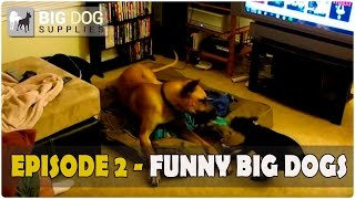 Funny Large Dog Video - Episode 2