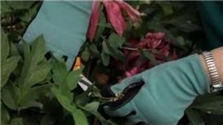 Flower Gardening : How to Trim Flowers in Gardens