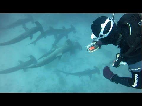 Galapagos Diving - Hammerhead Sharks @ Gordon Rocks