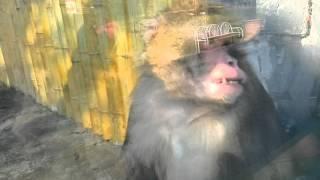 Прикол обезьяна в зоопарке