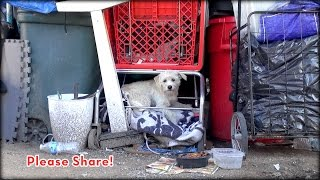 We Rescued A Dog Under A Shopping Cart, But You Won't Believe How This Story Ends! A Must See!