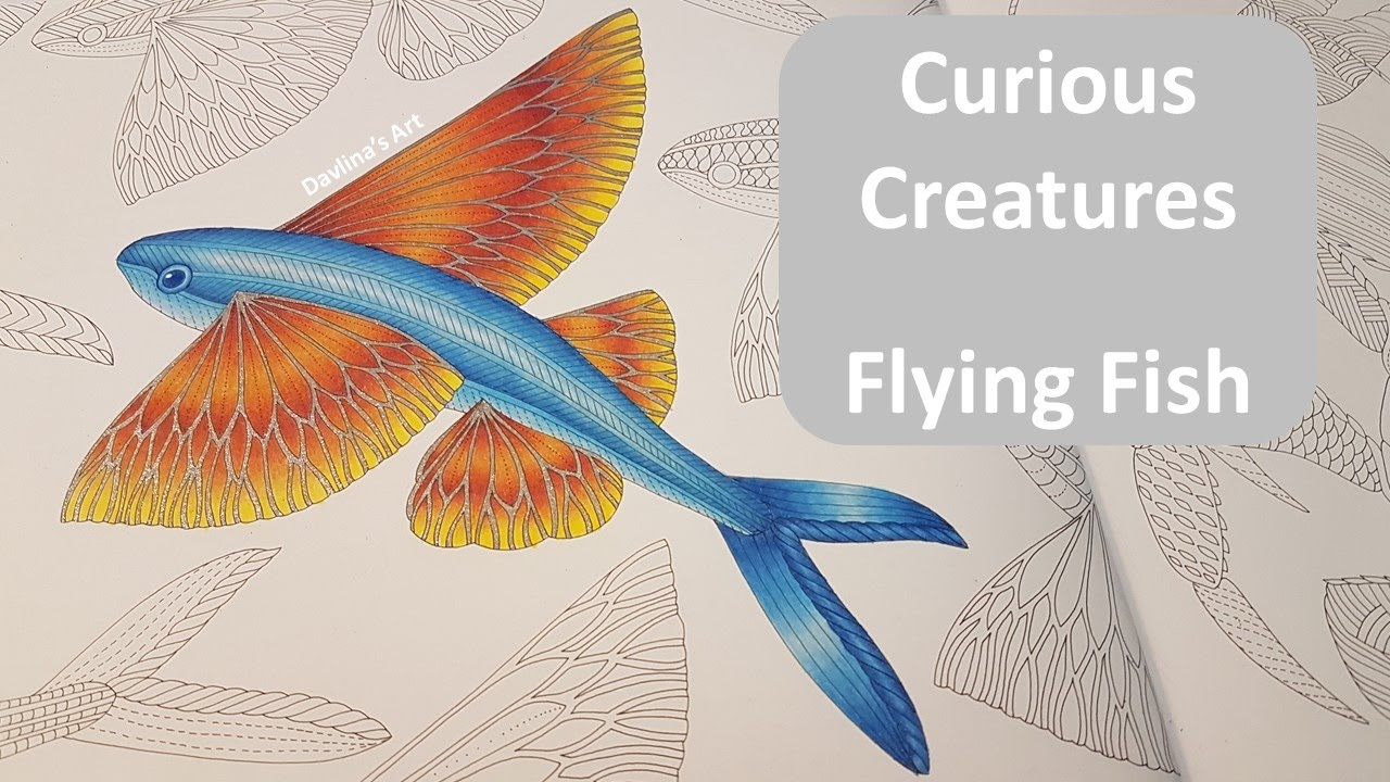 How to color a flying fish curious creatures by mille for Flying fish savannah ga