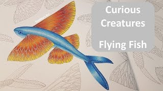 How to: Color a Flying Fish | CURIOUS CREATURES by Mille Marotta