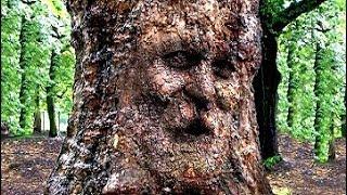 50 Самых Необычных Деревьев в Истории Мира