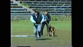 """Передача """"Просто собака"""", Первый чемпионат собак телохранителей 1996 год"""