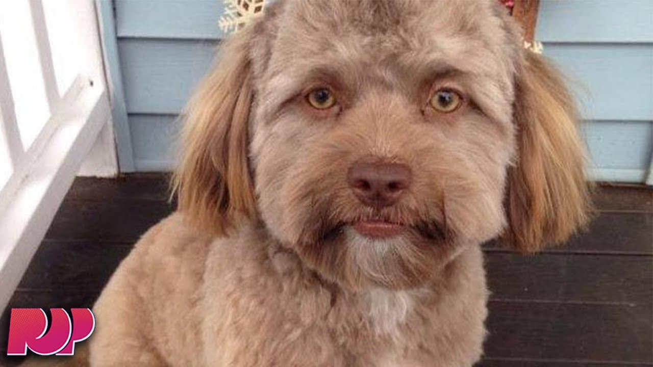 This Dog Has A Human Face And The Internet CAN'T HANDLE ...