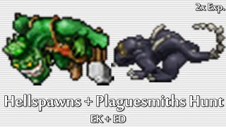 Tibia - Hellspawn & Plaguesmith Hunt (EK+ED) (2x Exp.)