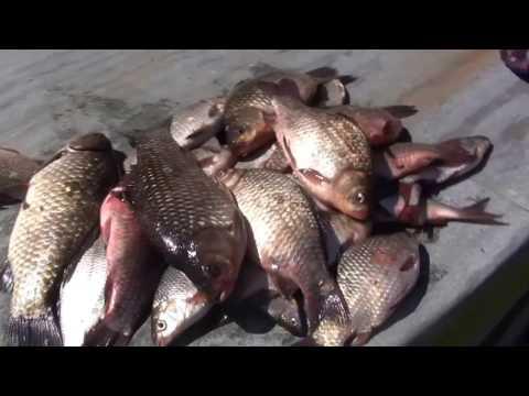 рыбалка в низовьях днепра видео