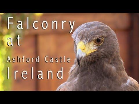 School of Falconry at Ashford Castle Ireland