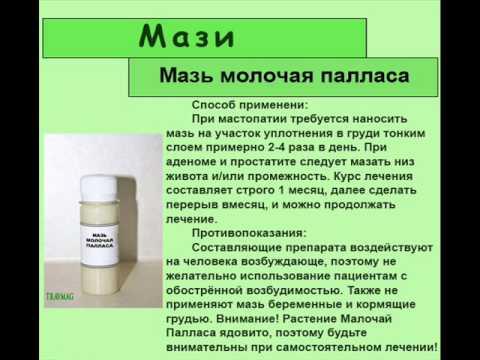 Молочай: уход в домашних условиях, виды, размножение