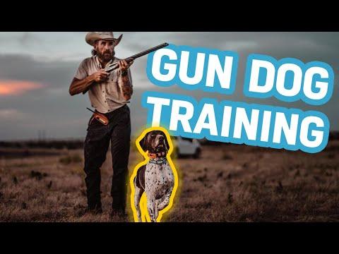 Hunting Dog Training Secrets & Gear 2020 (Bird Dog)
