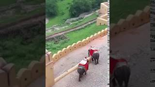 Beautifully Decorated Elephants Amer Fort. Get a Ride With Travel India Planet