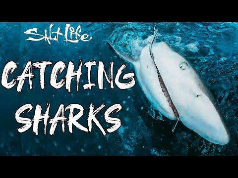 Best Of Catching Sharks   Salt Life