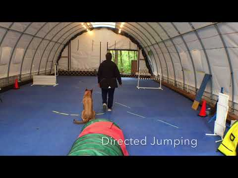 Kiwi Advanced and Expert Trick Dog Submission