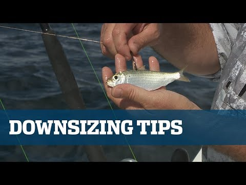 Scale Down For Increased Success - Florida Sport Fishing TV Pro's Tip