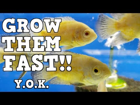 The Formula To Grow Fish Fast! You Oughta Know How To Grow Massive Fish!