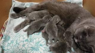 Прибавление в семействе кошка родила котят) Мои впечатления то как это было)