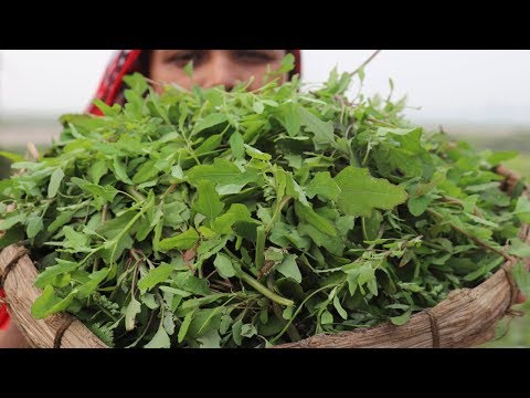 Village Food FARM FRESH Winter Vegetable Fry Recipe Village Style Delicious Fresh Bathua Shak Vaji
