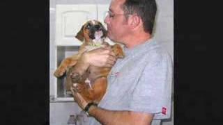 Secrets Of A Professional Dog Trainer