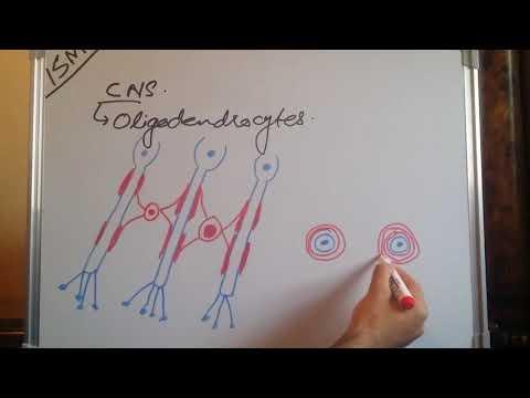 Myelination and unmyelination |zeshan shigri|ISM|
