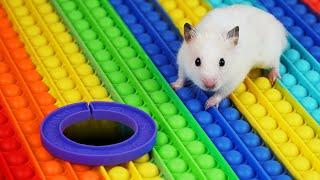 Hamster Pop It Maze
