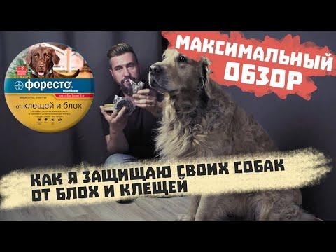 Видео: Защита собак от блох и клещей | Ошейник Форесто для собак |  Ошейник от блох и клещей