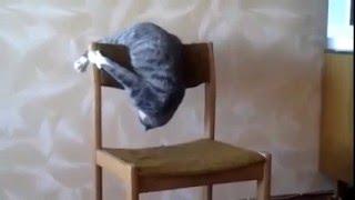 прикол супер кот. и его стул