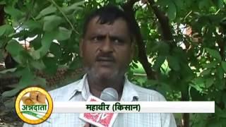 Farmer shares his experience on sweet corn, baby corn farming