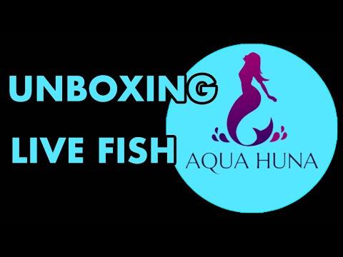 Aqua Huna Unboxing *LIVE FISH*