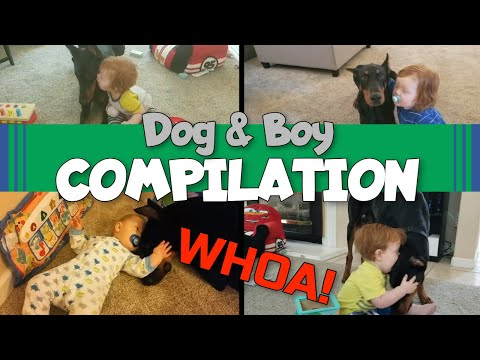 Doberman and Baby Compilation: A Kid's Unbreakable Bond with His Dog