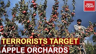 Terrorists Target Apple Orchards In J&K By Burning Them | Watch Ground Report