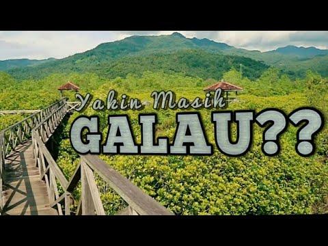 Jembatan Galau Dan Hutan Mangrove Pancer Cengkrong Trenggalek Jawa