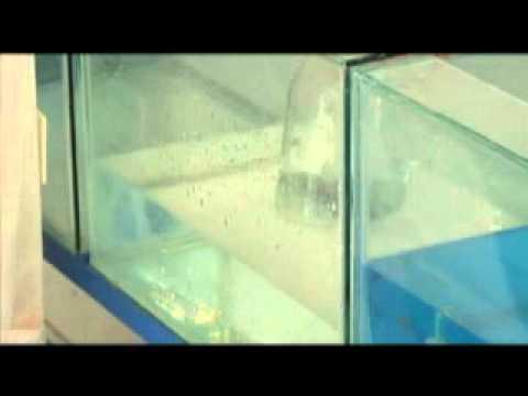 Cr a de peces ornamentales youtube for Manual de peces ornamentales
