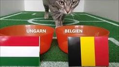 Emilias Fußball EM Tipp 2016 Ungarn : Belgien