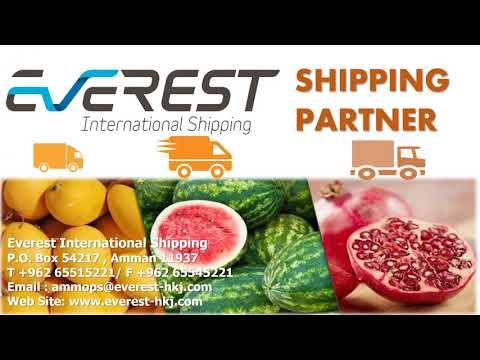 Everest International Shipping -Sep