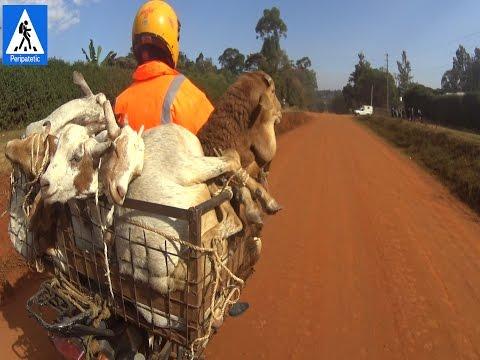 Перевозка животных в Африке ПЕРИПАТЕТИК