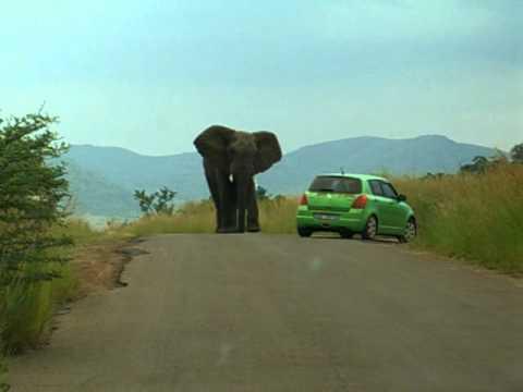 Big elephant versus Hyundai in Pilanesberg Park